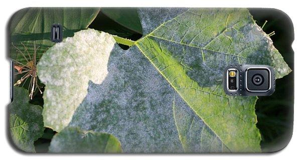 Calming Leafy Glade Galaxy S5 Case
