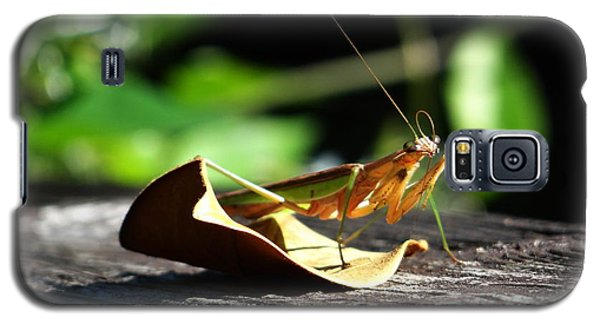 Leafy Praying Mantis Galaxy S5 Case