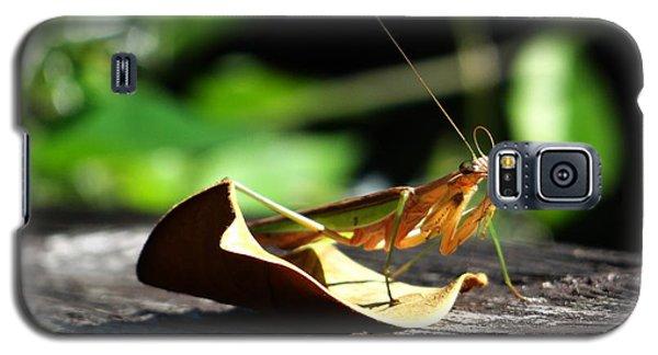 Leafy Praying Mantis Galaxy S5 Case