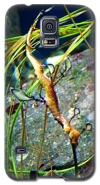 Leafy Sea Dragon  Galaxy S5 Case