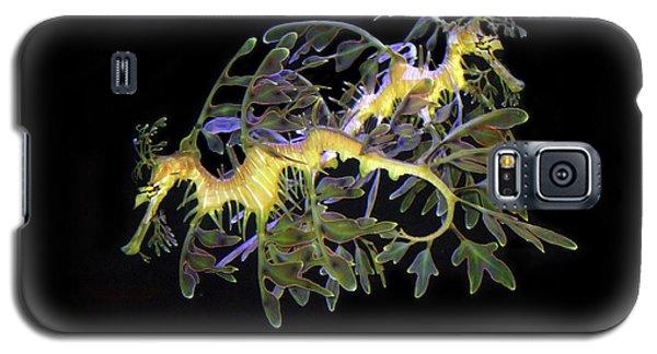 Leafy Sea Dragons Galaxy S5 Case