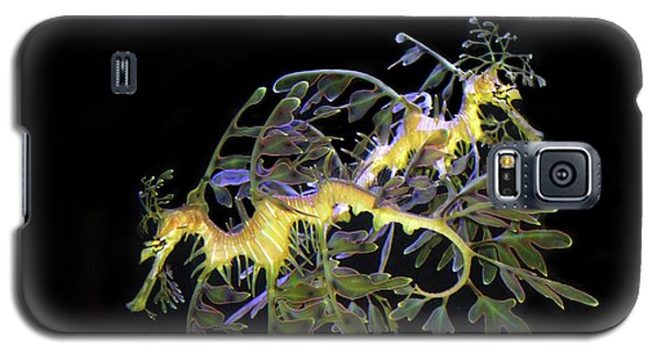 Leafy Sea Dragons Galaxy S5 Case