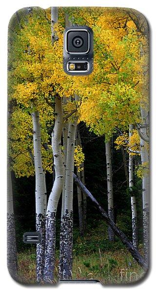 Leaning Aspen Galaxy S5 Case