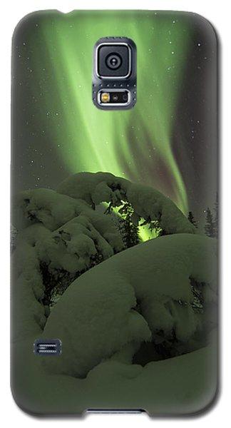 Leaning Spruce Aurora Galaxy S5 Case
