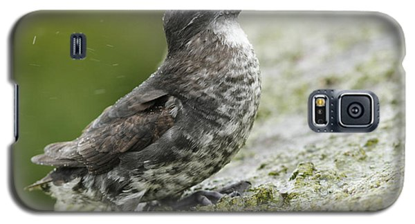Least Auklet Galaxy S5 Case by Desmond Dugan/FLPA