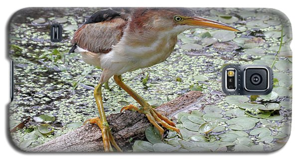 Galaxy S5 Case featuring the photograph Least Bittern by Doris Potter