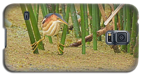 Least Bittern With Large Feet Galaxy S5 Case