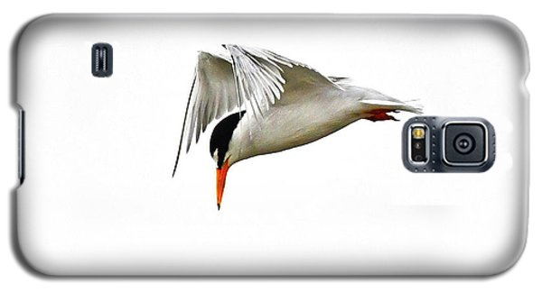 Least Tern  Galaxy S5 Case