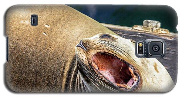 California Sea Lion Yawn Galaxy S5 Case