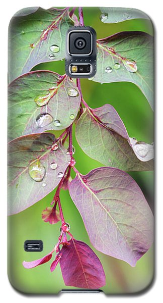 Leaves And Raindrops Galaxy S5 Case