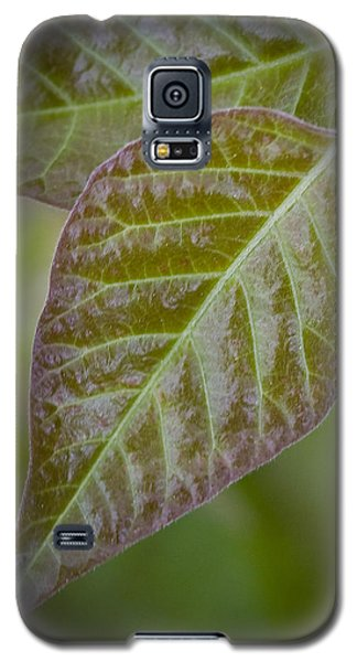 Galaxy S5 Case featuring the photograph Leaves by Bob Decker