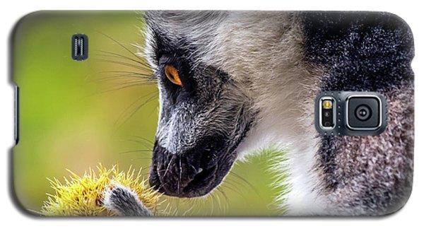 Lemur And Sweet Chestnut Galaxy S5 Case