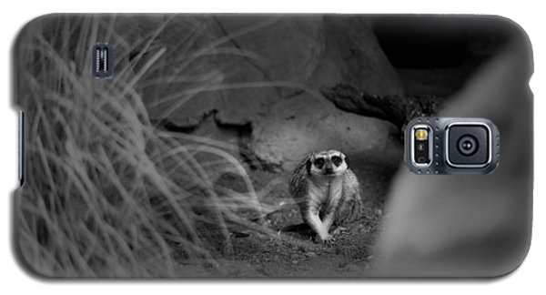 Lemur Galaxy S5 Case
