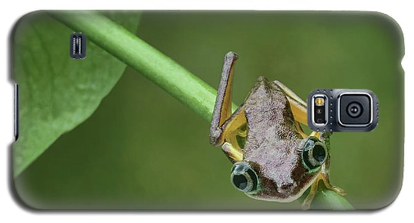 Galaxy S5 Case featuring the photograph Lemur Tree Frog - 1 by Nikolyn McDonald