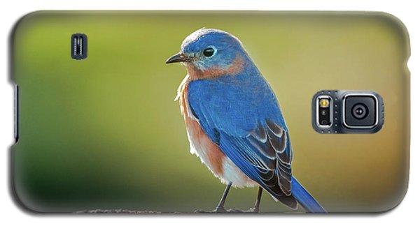 Lenore's Bluebird Galaxy S5 Case