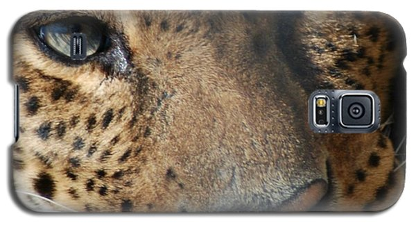 Galaxy S5 Case featuring the photograph Leopard Face by Richard Bryce and Family
