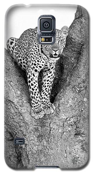 Leopard In A Tree Galaxy S5 Case by Richard Garvey-Williams