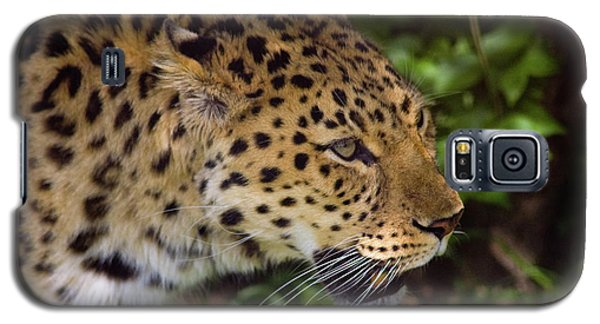 Galaxy S5 Case featuring the photograph Leopard by Steve Stuller