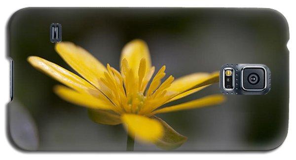Lesser Celandine Galaxy S5 Case