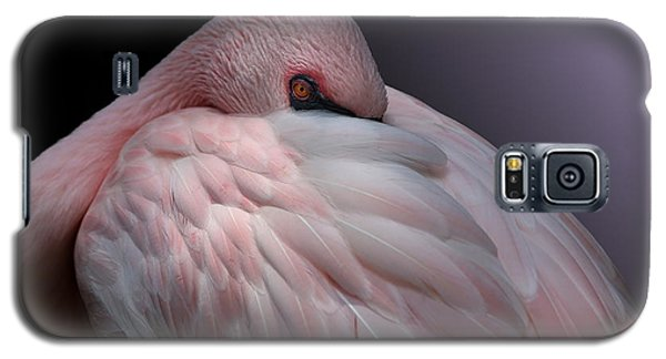 Lesser Flamingo Resting Galaxy S5 Case