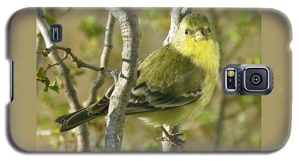 Lesser Goldfinch 1 Galaxy S5 Case