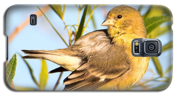 Galaxy S5 Case featuring the photograph Lesser Goldfinch by Dan McManus