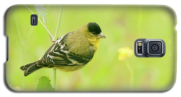 Galaxy S5 Case featuring the photograph Lesser Goldfinch  by Ram Vasudev