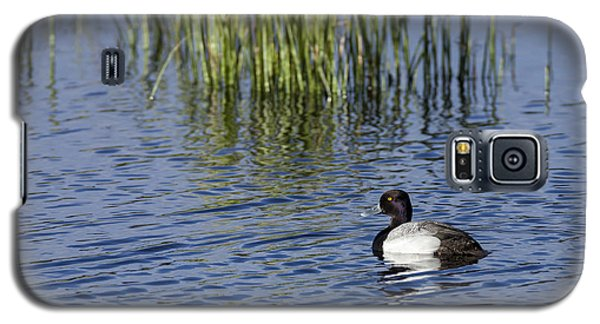 Lesser Scaup Adult Male Galaxy S5 Case