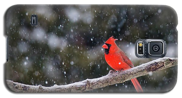 Galaxy S5 Case featuring the photograph Let It Snow by Mircea Costina Photography