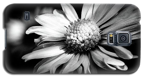 Leucanthemum Adustum Galaxy S5 Case