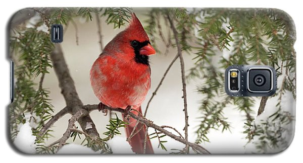 Galaxy S5 Case featuring the photograph Leucistic Northern Cardinal by Everet Regal