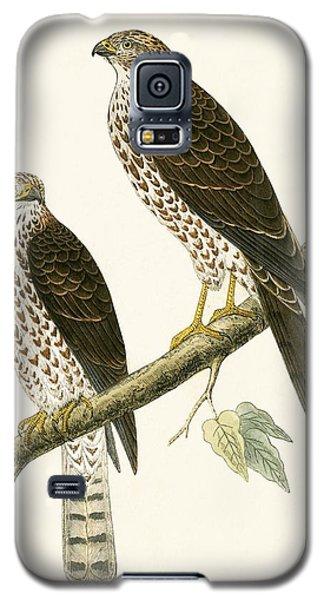 Levant Sparrow Hawk Galaxy S5 Case by English School
