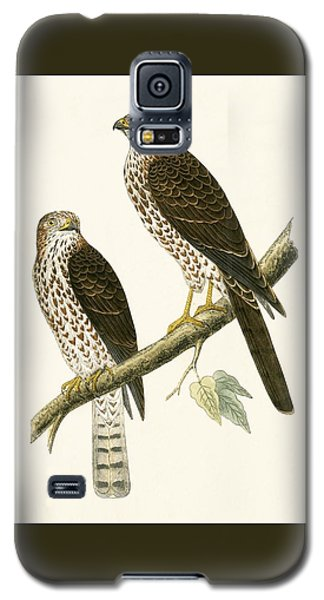 Levant Sparrow Hawk Galaxy S5 Case