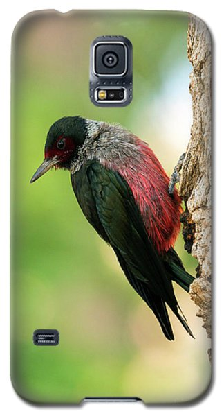 Lewis Woodpecker Galaxy S5 Case