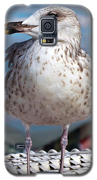 Liberty Of An Pacific Gull Galaxy S5 Case
