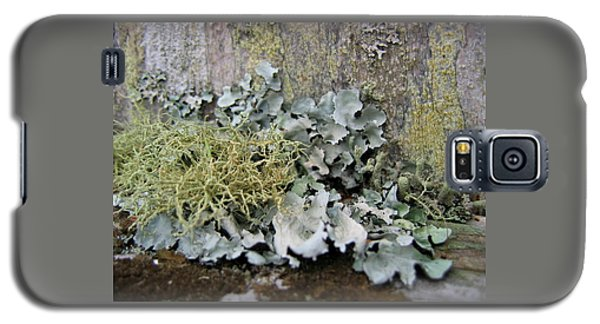 Lichen And Old Fence #2 Galaxy S5 Case