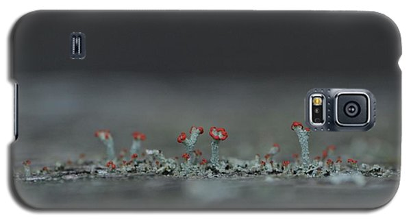 Lichen-scape Galaxy S5 Case by JD Grimes