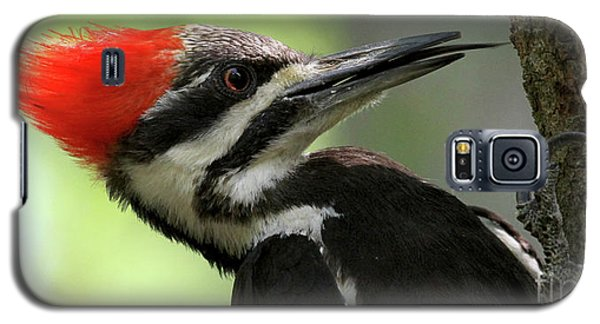 Lick It Up - Pileated Woodpecker Galaxy S5 Case
