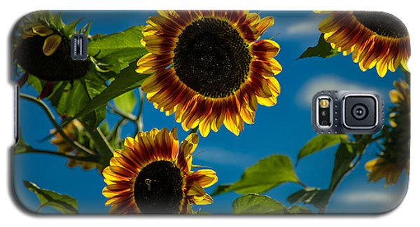 Galaxy S5 Case featuring the photograph Life Of A Bumble Bee by Jason Moynihan