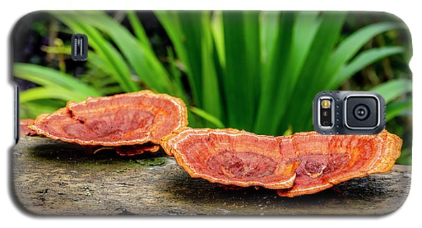 Life On A Log Galaxy S5 Case