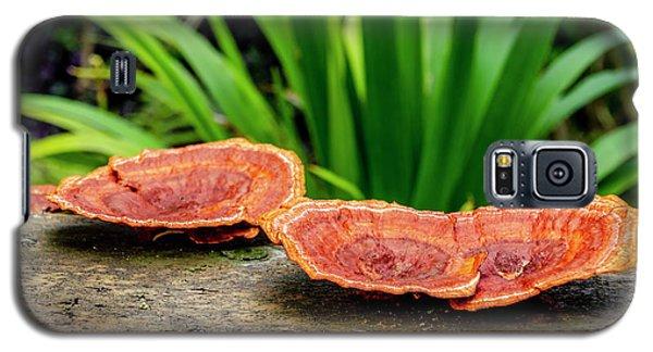 Life On A Log Galaxy S5 Case