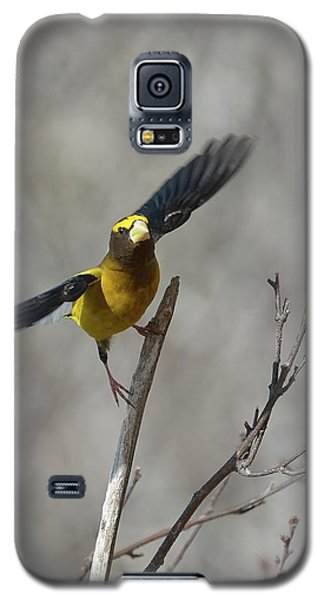 Liftoff-male Evening Grosbeak Galaxy S5 Case