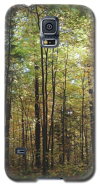 Galaxy S5 Case featuring the photograph Light Among The Trees Vertical by Felipe Adan Lerma