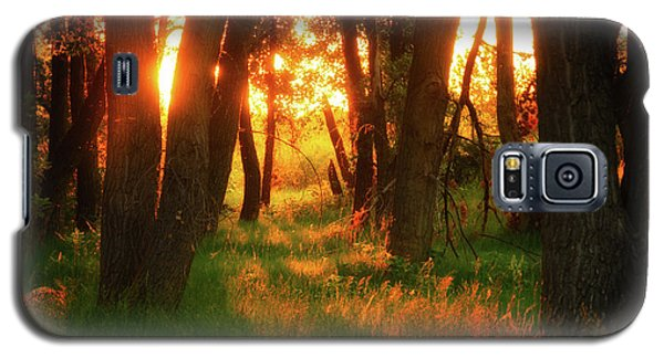 Galaxy S5 Case featuring the photograph Light Of The Forest II by John De Bord