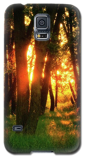 Galaxy S5 Case featuring the photograph Light Of The Forest by John De Bord