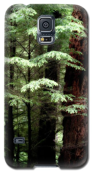 Light On Trees Galaxy S5 Case