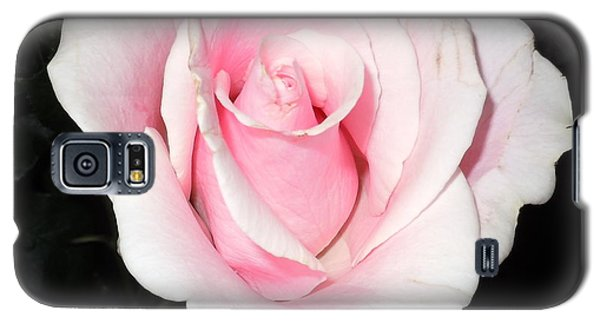 Light Pink Rose Galaxy S5 Case