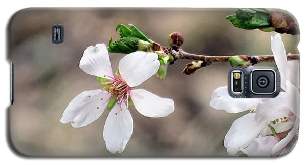 Galaxy S5 Case featuring the photograph Light Pink Weeping Cherry Blossom by Janice Drew