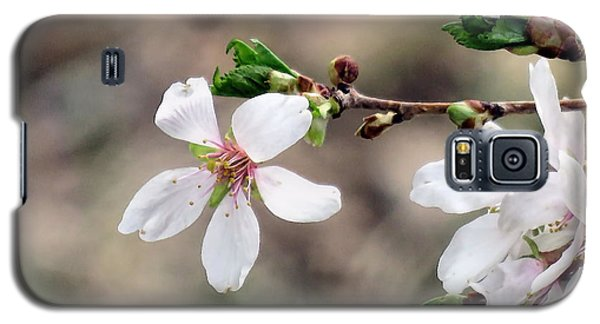 Light Pink Weeping Cherry Blossom Galaxy S5 Case by Janice Drew