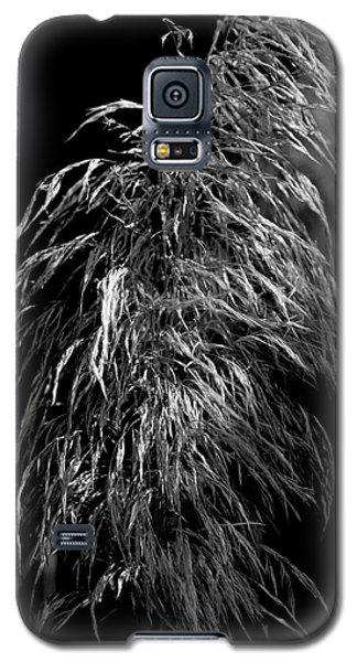 Light Shadows Galaxy S5 Case